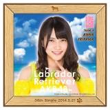 AKB48 ラブラドール・レトリバー推しタオル 入山 杏奈