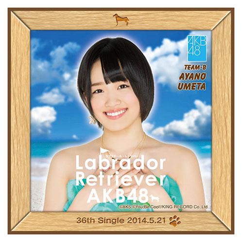 AKB48 ラブラドール・レトリバー推しタオル 梅田 綾乃