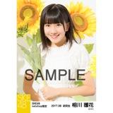 SKE48 2017年8月度 net shop限定個別生写真「ひまわり畑」5枚セット 相川暖花