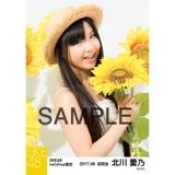 SKE48 2017年8月度 net shop限定個別生写真「ひまわり畑」5枚セット 北川愛乃